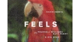 Feels Calvin Harris feat. Pharrell Williams & Katy Perry & Big Sean
